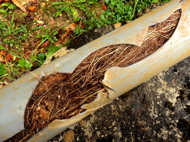 split-drainage-pipe-with-tree-roots